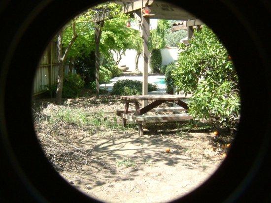Backyard landscape for birds photos - Backyard Birds of ... on Birds Backyard Landscapes id=57135